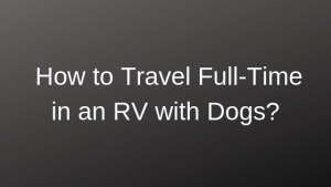 full time rv life, dogs